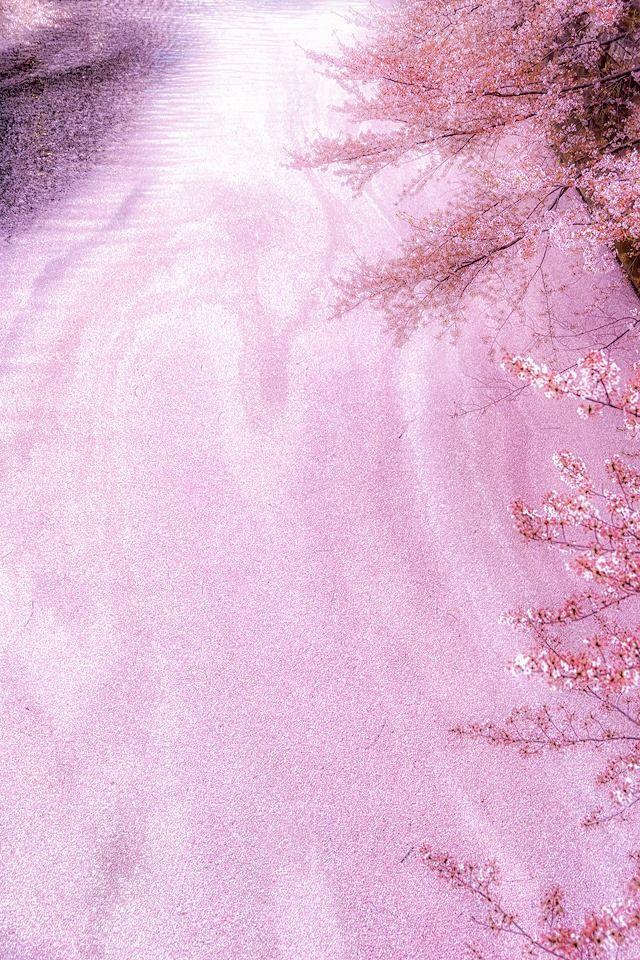 Meguro River 東京カメラ部 New:Satoru Fukuda #桜 #CherryBlossom