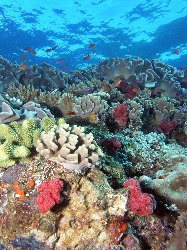 ¿Qué son los arrecifes de coral?: El arrecife