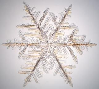 Snowflake Physicist's Photographs