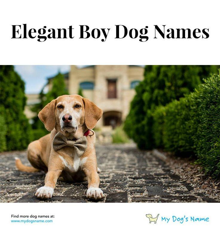 Get inspiration for elegant boy dog names at mydogsname.com