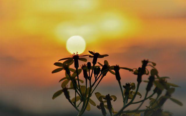 M  o   m   e   n   t   s   b   o   o   k   .   c   o   m: Flower at sunset..