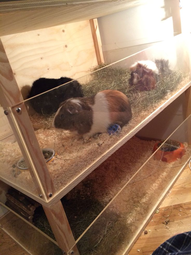 diy guinea pig cage made out of wood and plexy glass diy