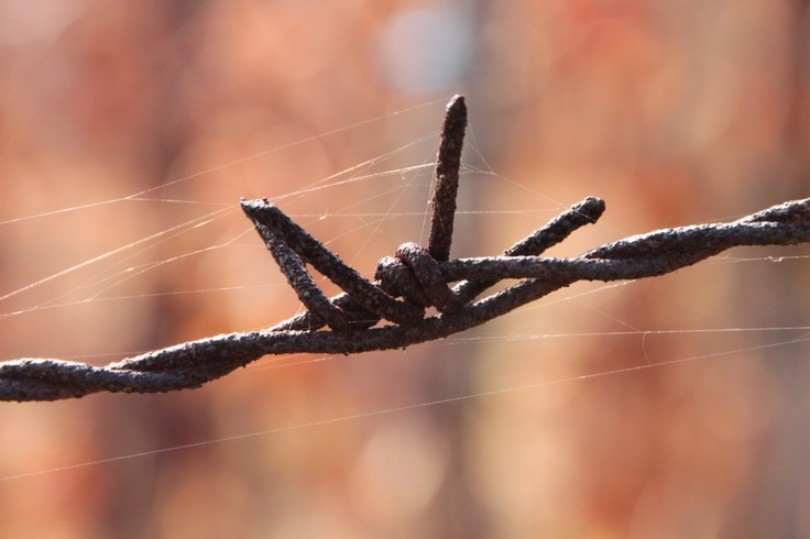 Rusty Barbed Wire - Public Domain Photos, Free Images for Commercial Use
