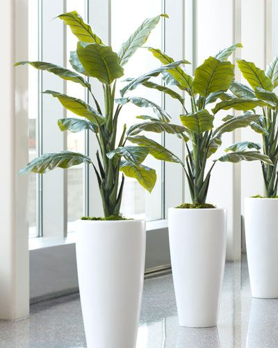 """{$tab:description} Natural Beauty; Unnatural Longevity The Philodendron has long been favored as an ornamental interior plant for its large beautiful leaves. Our artificial variety maintains this lush green foliage for a lifetime – it will never drop its leaves. Also Available: Dieffenbachia Silk Plant {$tab:DETAILS}  4' Height x 36""""Width Lush Green Coloration  Impressive 14"""" Leaves  Beautifully Detailed Trunk  Outstanding Realism  Arrives Fully Assembled & Ready for Dis..."""