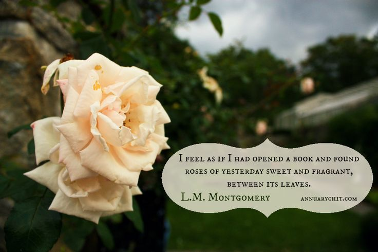 """Rose #Quote by L. M. Montgomery on photo from Stevens-Coolidge Place via @CMcKane.     """"I feel as if I had opened a book and found roses of yesterday sweet and fragrant, between its leaves."""""""