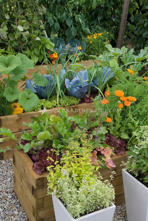 Vegetable And Flower Garden In Raised Beds With Cabbage 400 x 300