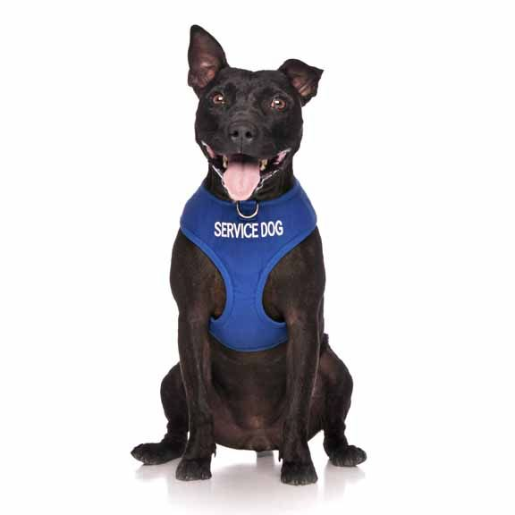 """Blue SERVICE DOG vest harness   Fits Max Neck 40cm (15"""") Chest 48-72cm (19-28"""") 3 words embroidered   Model: Staffy"""