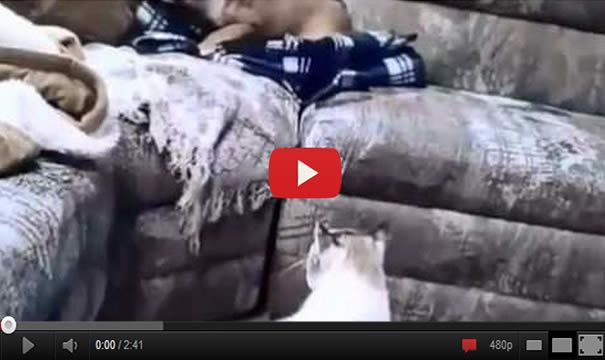 Cat Scaring The Hell Out Of A Dog