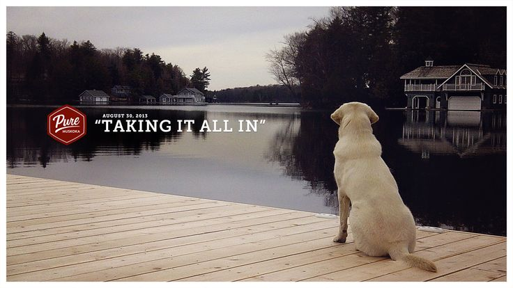 Congratulations to Alana Evans for submitting this stunning photo of their dog Ella reflecting on her new life.   Ella was a rescue dog.