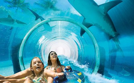 Sliding straight through a shark tank at Aquaventure. Free access to all guests at Atlantis the Palm with letsgo2