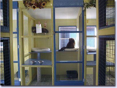 Indoor Cat Room Casa Gatos Camas Y Rascaderos