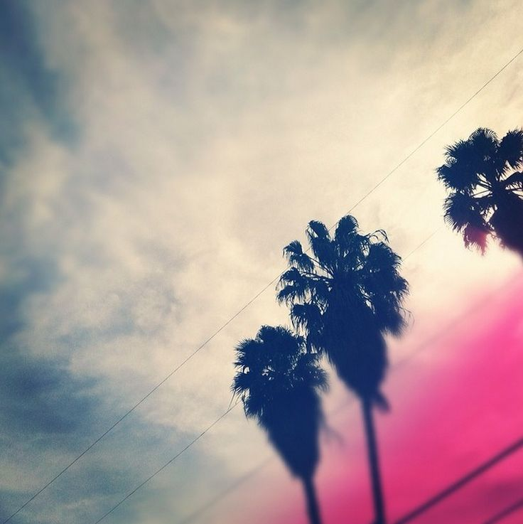 sunsets and palm trees. #LAlife