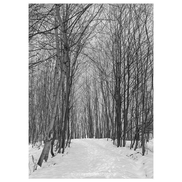 I wandered outside the city and luckily the snow is still in plenty there.⠀ ☆ 2nd February 2018 @ Dolina Kobylańska, Małopolska, Poland