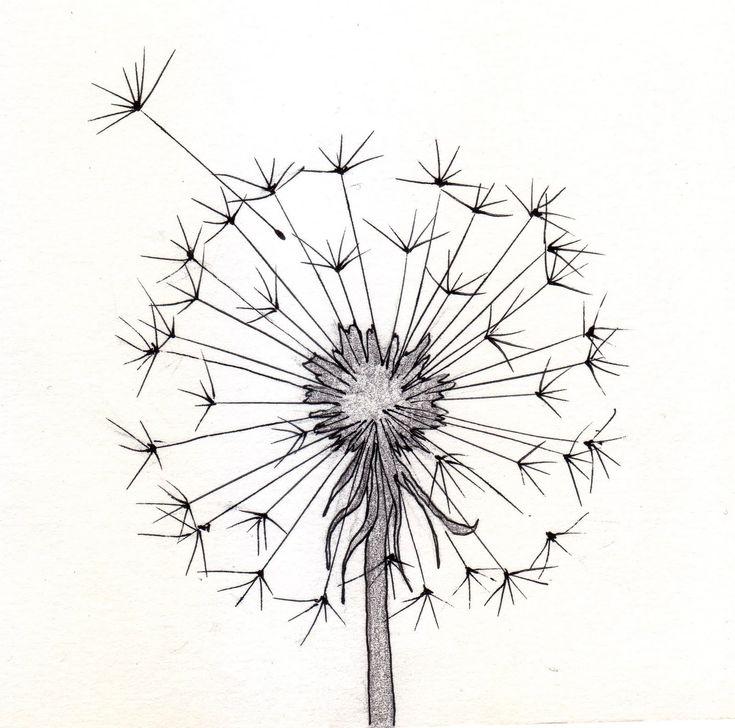 Dandelion sketch                                                                                                                                                                                 Más