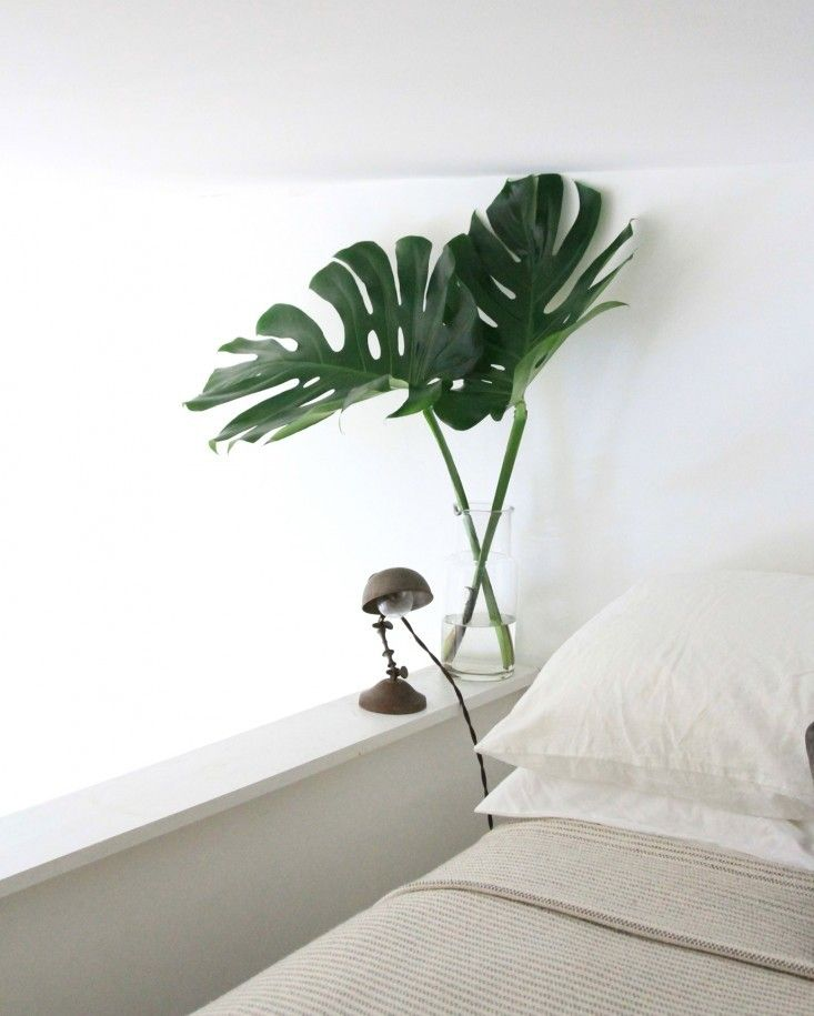 Stems of monstera in a vase look fantastic in a vase if - Vase decoration interieur ...