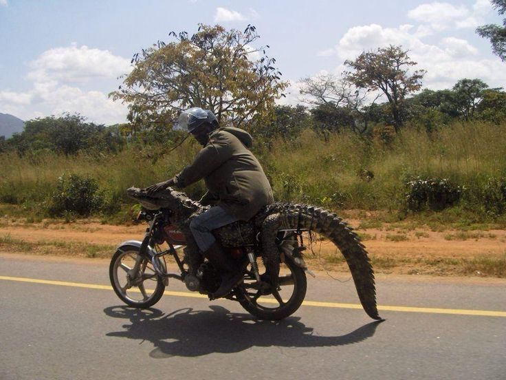 There's never a dull day in Africa.