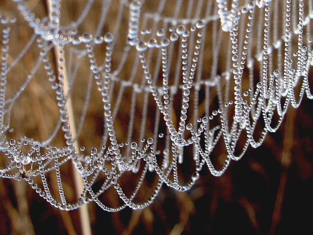 Pix For > Most Beautiful Spider Webs