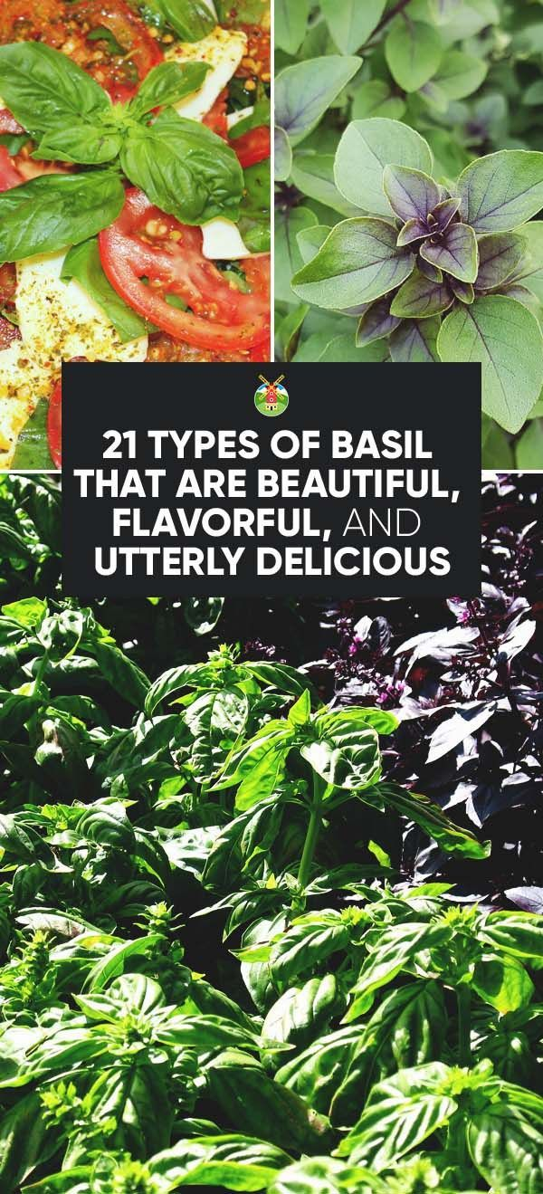21 Types of Basil That Are Beautiful, Flavorful, and Utterly Delicious Ida Brown