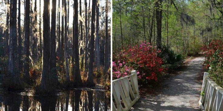Explore Cypress Gardens, Charleston's most enchanting park #travel #roadtrips #roadtrippers