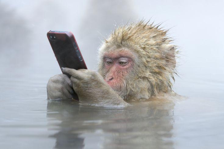 「Facebook update」。同氏のインタビュー記事によると、この写真は長野県山之内町にある地獄谷野猿公苑で撮影。入浴中のサルを撮影しようとした観光客が接近しすぎて、iPhoneをサルに取られてしまったのだという。