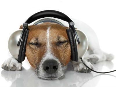 ¿Sabias que… la música influye en el comportamiento de tu perro?