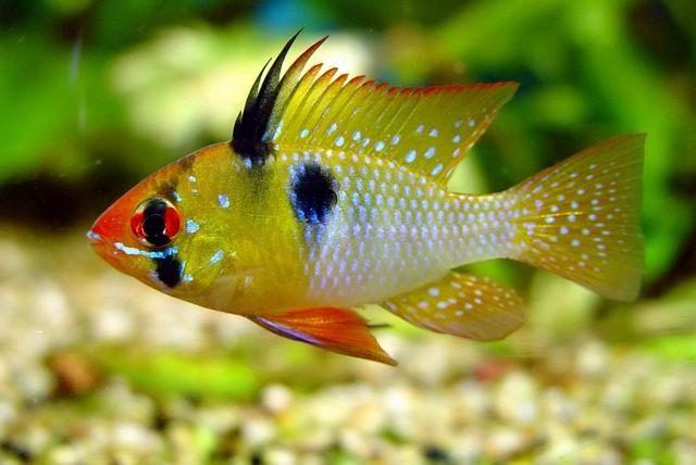 Akváriumi halak - korallosakvarium.hu