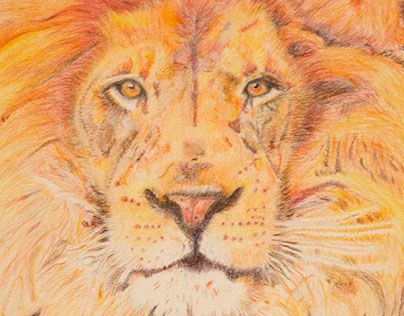 """Check out new work on my @Behance portfolio: """"Lion Illustration"""" http://be.net/gallery/31472199/Lion-Illustration"""