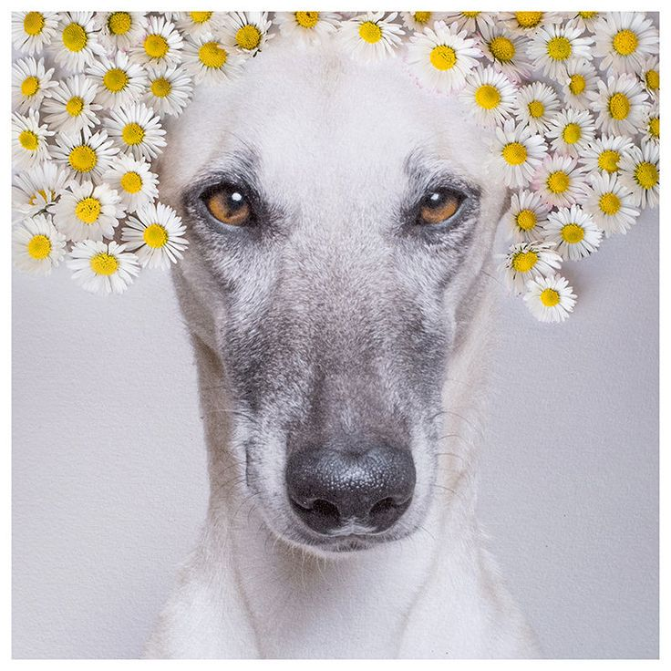 Daisy princess by Elke Vogelsang on 500px