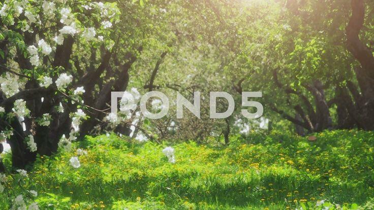 Spring Garden - Стоковое видео | by TS_media