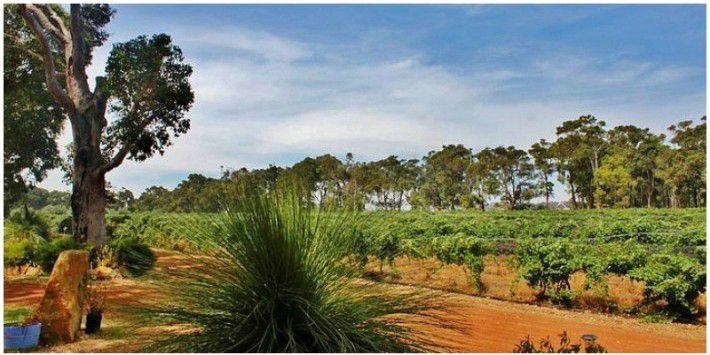 Go wine tasting in famous, Margaret River, Western Australia