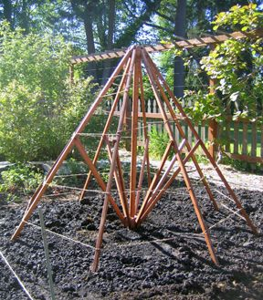 What a clever re-use idea! They took the frame from an old patio umbrella, and turned it into a pea and bean trellis!