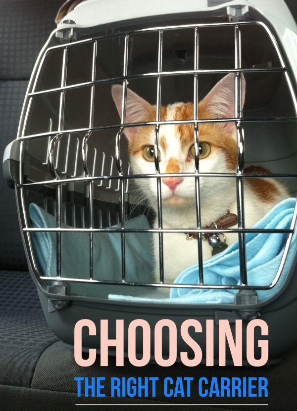 Choosing a cat carrier is an important decision for you and your cat; even if you only use it occasionally for vet check-ups | Guide to Choosing the Right Cat Carrier