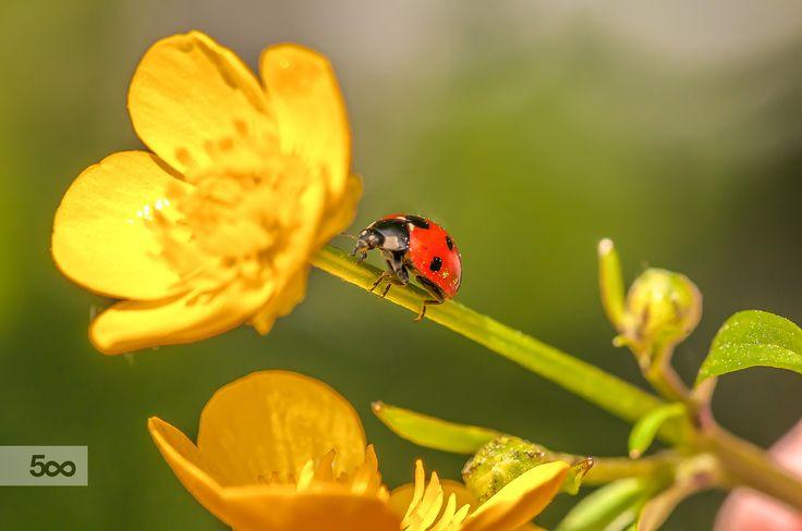 Ladybird°°° by Graziella Serra Art & Photo on 500px