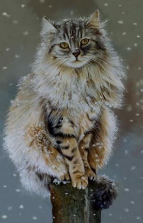 How Long Do Cats Sulk