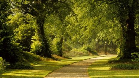 The Lime Avenue at Biddulph Grange Garden looking towards the gates.