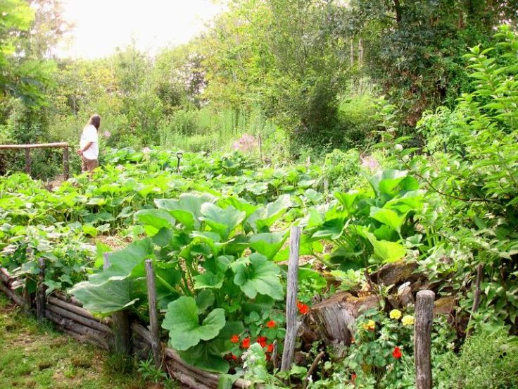 Just A Beautiful Veggie Garden.