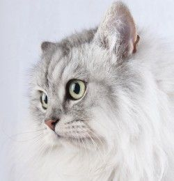 Cat with CarpetTherapy http://www.49lley.com/n/introduction-to-carpettherapyC2A9