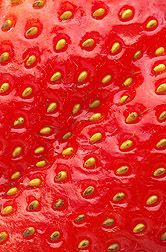 Strawberry Fruit  [ up-close with seeds ]. America's strawberry growers are testing various new methods of growing beautiful berries like this one without using methyl bromide -- an effective but environmentally-unfriendly soil-fumigant.