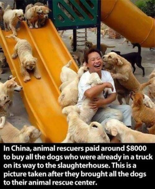 Love this!! Who says money cannot buy you happiness? It can buy you a truck-load of puppies and that's pretty much the same thing.