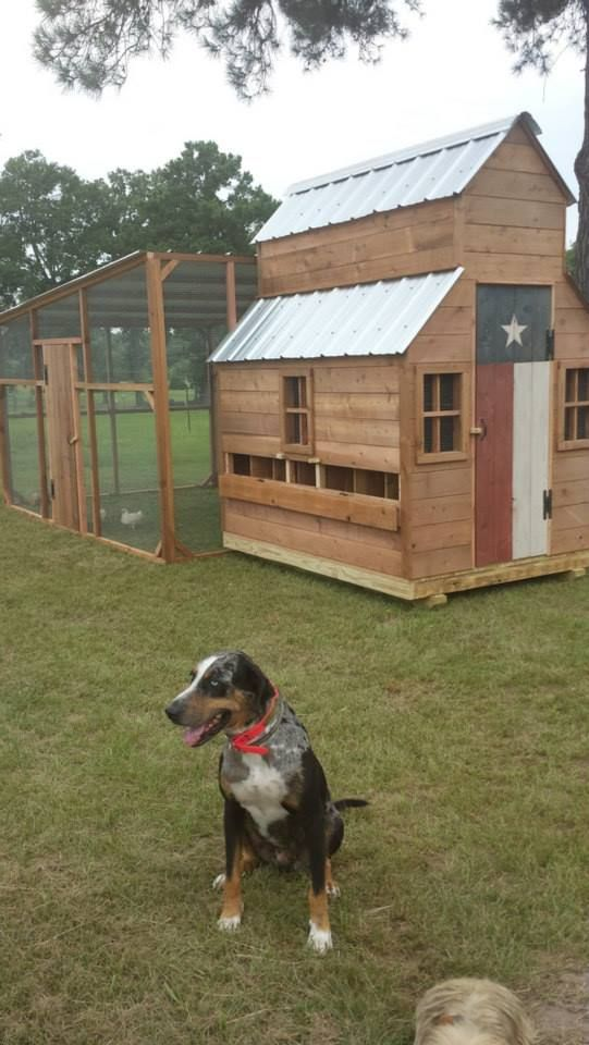 Chicken coop photo contest entry via The Chicken Chick on Facebook!