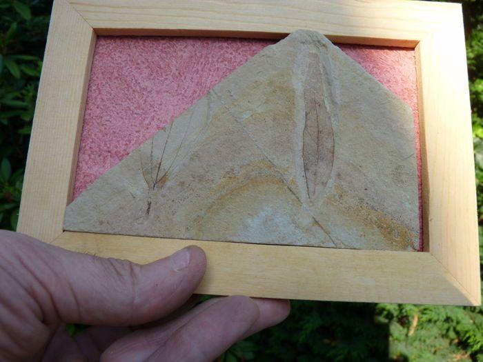 Decoratieve bestuur - afdrukken van gefossiliseerde laurierblaadjes - 135 x 9 cm - 166 g  Prachtig Raad van 175 x 13 cm bestaat uit een prachtige plaque bedrukt met versteende laurierblaadjesWeelderige graphics en finesseDe fossielen zijn zorgvuldig gewist met de hand zonder fakery of te lijmenFossiele gegarandeerd 100% natuurlijkeHet formaat van plaque: 135 x 9 cmGewicht: 166 gBijgehouden zending.  EUR 1.00  Meer informatie