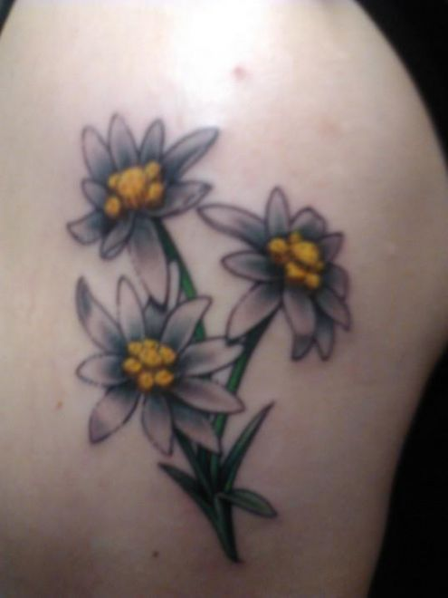 white edelweiss shaded with purple. better than a true white ink tattoo?