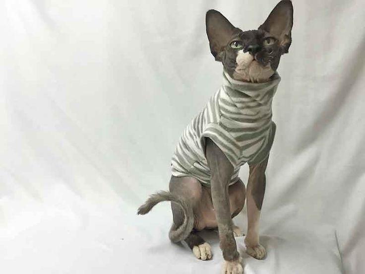 Moleton léger, doux et chaud, vêtement pour chat Polocats de la boutique PolocatsCreations sur Etsy
