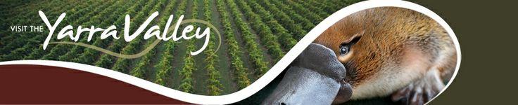 Yarra Valley - Wines
