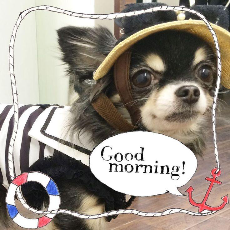おはようございます 2016SSをチラッと  セーラーカラーと ストローハット  モデル犬に試着してもらい 細かいサイズや形を 何度も何度もチェックします  かなり可愛く仕上がりました 今年はクールのワンピースも発売しますよ   #2016ss #chihuahua #チワワ #チワワ部 #犬の帽子 #犬用帽子 #新作 #セーラーカラー #犬服 #dogwear #doghat #マリン #marin #麦わら #GODPIVA #ゴッドピバ #犬バカ部 #dogstagram #doggoods #dogwear #ilovemydog #instadog #petstagram #instapet #doglover #webstagram #cawaii #犬バカ部 by godpiva_official #lacyandpaws