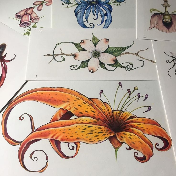 People have been asking to see more of my colored pencil botanical drawings. Here's a few more! Prisma colored pencils have an awesome blender pencil that is basically clear. I can not recommend it enough! Especially if you use it on papers with a little texture like canson.  #prismacolorpencils #botanical #ink #tattoo #tigerlily #shannatrumbly