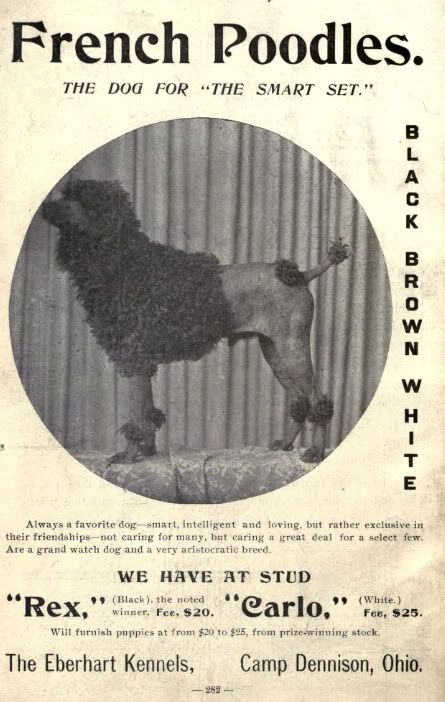 1902 'Black, Brown, and White Poodles' -kennel ad