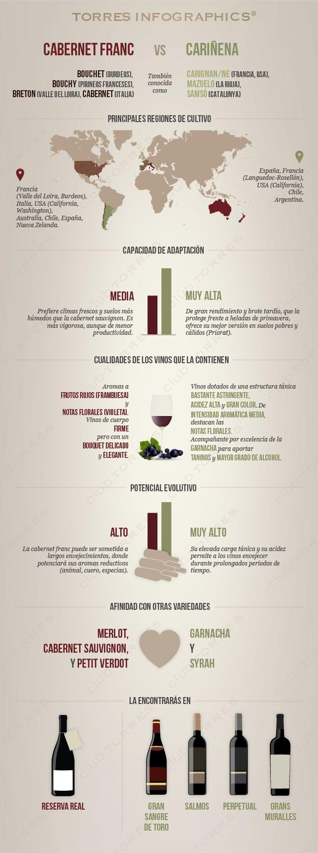 #infografía: Cabernet franc VS Cariñena. Dos variedades que despiertan pasiones encontradas. #clubtorres