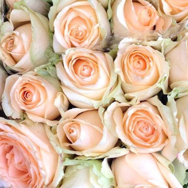 Piękne róże! #roses