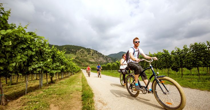 Taste delicious Austrian wines on a full-day bike tour of the Wachau Valley. Discover one of Austria's premier wine-producing regions while biking along easy and well-surfaced routes.